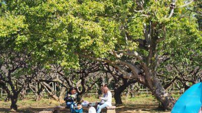 市川動植物園広場