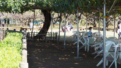 市川動植物園汽車